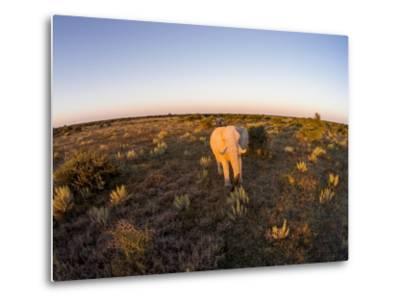 Aerial View of Elephant, Nxai Pan National Park, Botswana-Paul Souders-Metal Print