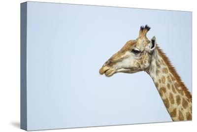 Giraffe, Moremi Game Reserve, Botswana-Paul Souders-Stretched Canvas Print