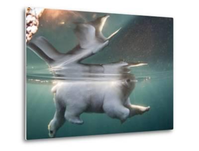 Underwater Polar Bear, Hudson Bay, Nunavut, Canada-Paul Souders-Metal Print