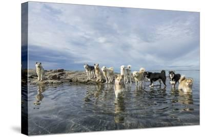 Sled Dogs, Nunavut, Canada-Paul Souders-Stretched Canvas Print