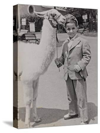 Baby at the Zoo with a Llama-Luigi Leoni-Stretched Canvas Print