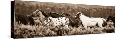 Sepia Horses-Gary Crandall-Stretched Canvas Print