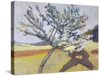 Liegender Mann Unter Bluehendem Baum, 1903-Paula Modersohn-Becker-Stretched Canvas Print