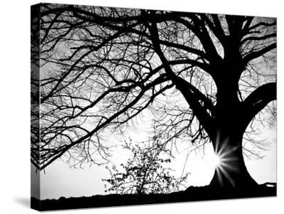 Old Tree-PhotoINC-Stretched Canvas Print