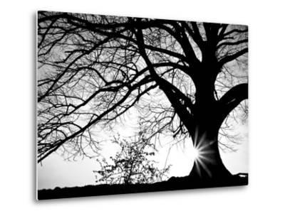 Old Tree-PhotoINC-Metal Print