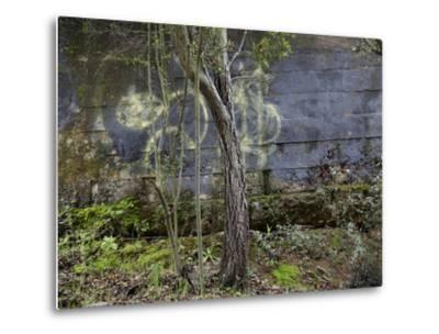 Tree and Graffiti Wall (Oakland, CA)-Henri Silberman-Metal Print