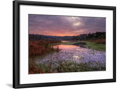 Marsh Sunrise at Fort Bragg, California Coast-Vincent James-Framed Photographic Print