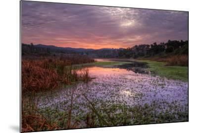 Marsh Sunrise at Fort Bragg, California Coast-Vincent James-Mounted Photographic Print