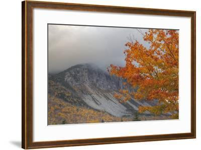 Foggy Autumn Design at White Mountain, New Hampshire-Vincent James-Framed Photographic Print