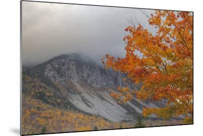 Foggy Autumn Design at White Mountain, New Hampshire-Vincent James-Mounted Photographic Print