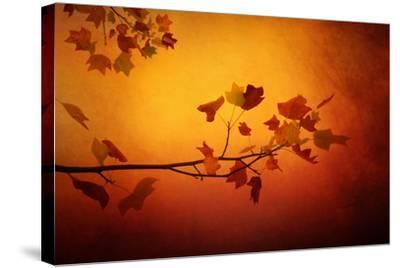All Precious Things-Philippe Sainte-Laudy-Stretched Canvas Print