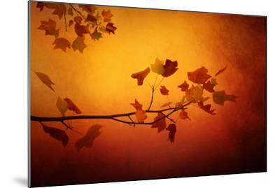All Precious Things-Philippe Sainte-Laudy-Mounted Photographic Print