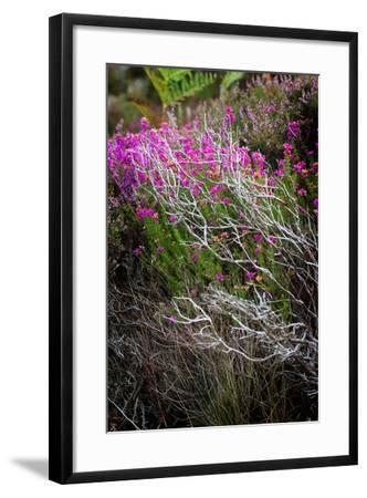 Eminent-Philippe Sainte-Laudy-Framed Photographic Print