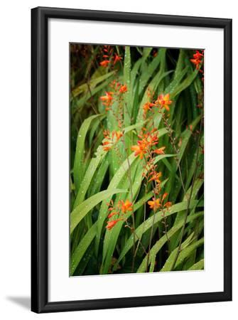 Nature's Caligraphy-Philippe Sainte-Laudy-Framed Photographic Print