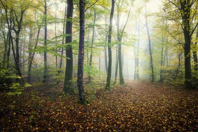 Autumn Path-Philippe Manguin-Framed Photographic Print