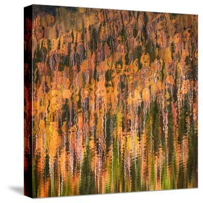 Fall Party-Ursula Abresch-Stretched Canvas Print