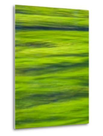 Oh So Green-Doug Chinnery-Metal Print