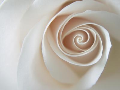 White Rose Swirl-Karen Ussery-Framed Premium Giclee Print