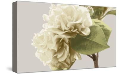 Vintage Florals G-GI ArtLab-Stretched Canvas Print