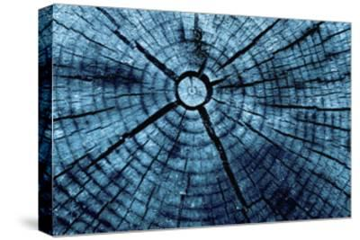 Tree Rings 2-GI ArtLab-Stretched Canvas Print