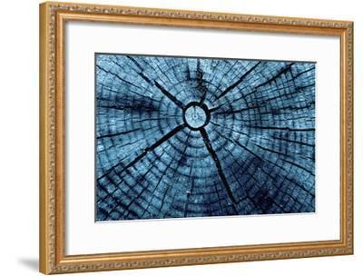 Tree Rings 2-GI ArtLab-Framed Premium Giclee Print