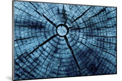 Tree Rings 2-GI ArtLab-Mounted Premium Giclee Print