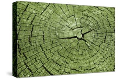 Tree Rings 4-GI ArtLab-Stretched Canvas Print
