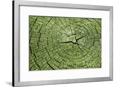 Tree Rings 4-GI ArtLab-Framed Premium Giclee Print