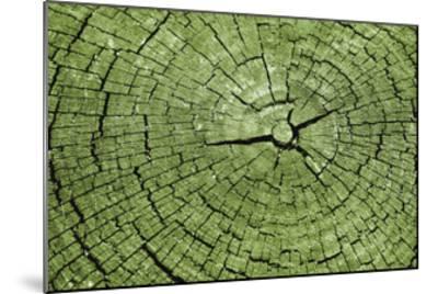 Tree Rings 4-GI ArtLab-Mounted Premium Giclee Print