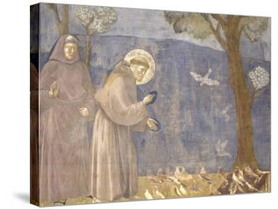 St. Francis Preaching to the Birds-Giotto-Stretched Canvas Print