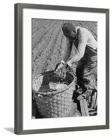 African American Farmer Planting Cotton in a Plowed Field in Butler County, Alabama, April 1941--Framed Photo