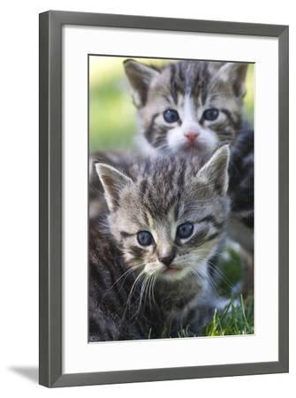Kittens Sitting in the Grass--Framed Photo