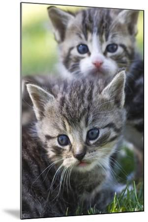 Kittens Sitting in the Grass--Mounted Photo