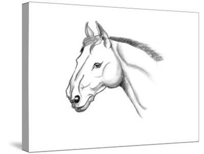 Horse Head Sketch-jim80-Stretched Canvas Print