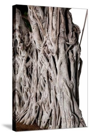 Bonsai-Fabio Petroni-Stretched Canvas Print
