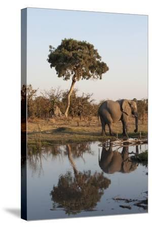 African Elephant-Sergio Pitamitz-Stretched Canvas Print