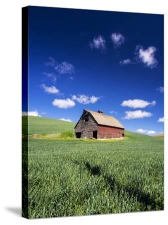 Old Red Barn in a Field of Spring Wheat-Terry Eggers-Stretched Canvas Print
