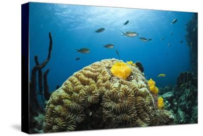 Caribbean Coral Reef-Reinhard Dirscherl-Stretched Canvas Print