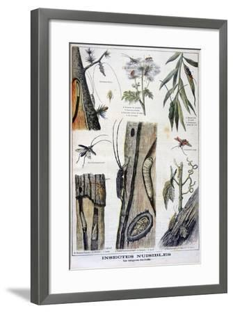 Harmful Insects That are Destructive to Forests, 1897-A Clement-Framed Giclee Print