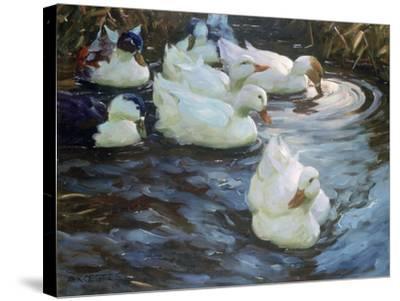 Ducks on a Pond, C1884-1932-Alexander Koester-Stretched Canvas Print