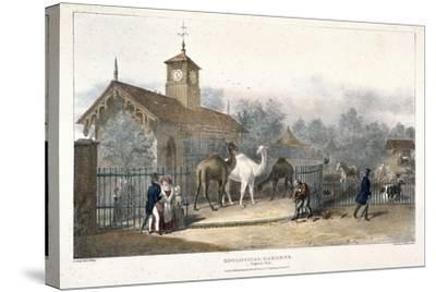 Zoological Gardens, Regent's Park, London, 1835-Charles Joseph Hullmandel-Stretched Canvas Print