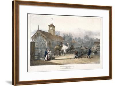 Zoological Gardens, Regent's Park, London, 1835-Charles Joseph Hullmandel-Framed Giclee Print