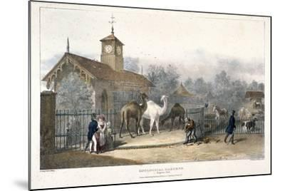 Zoological Gardens, Regent's Park, London, 1835-Charles Joseph Hullmandel-Mounted Giclee Print