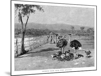 Ostrich Farm Near Port Augusta, South Australia, 1886-Frank P Mahony-Mounted Giclee Print