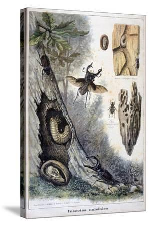 Harmful Insects, 1897-F Meaulle-Stretched Canvas Print
