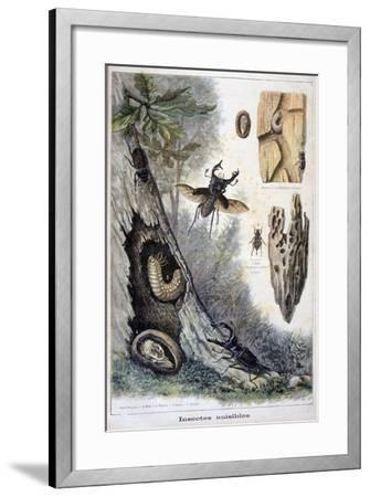 Harmful Insects, 1897-F Meaulle-Framed Giclee Print
