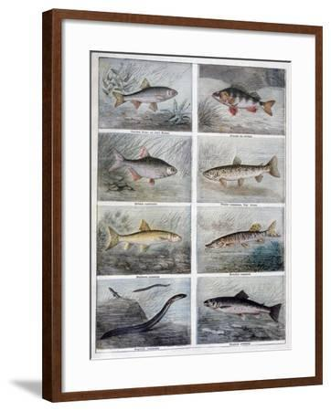 Freshwater Fish, 1897-F Meaulle-Framed Giclee Print