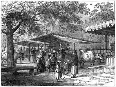 A Milk Fair, St James's Park, London, 1891-J Greenaway-Giclee Print