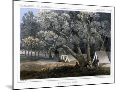 A Cotton Wood Grove, 1856-John Mix Stanley-Mounted Giclee Print