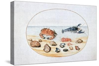 Shells and Shellfish, 16th Century-Joris Hoefnagel-Stretched Canvas Print